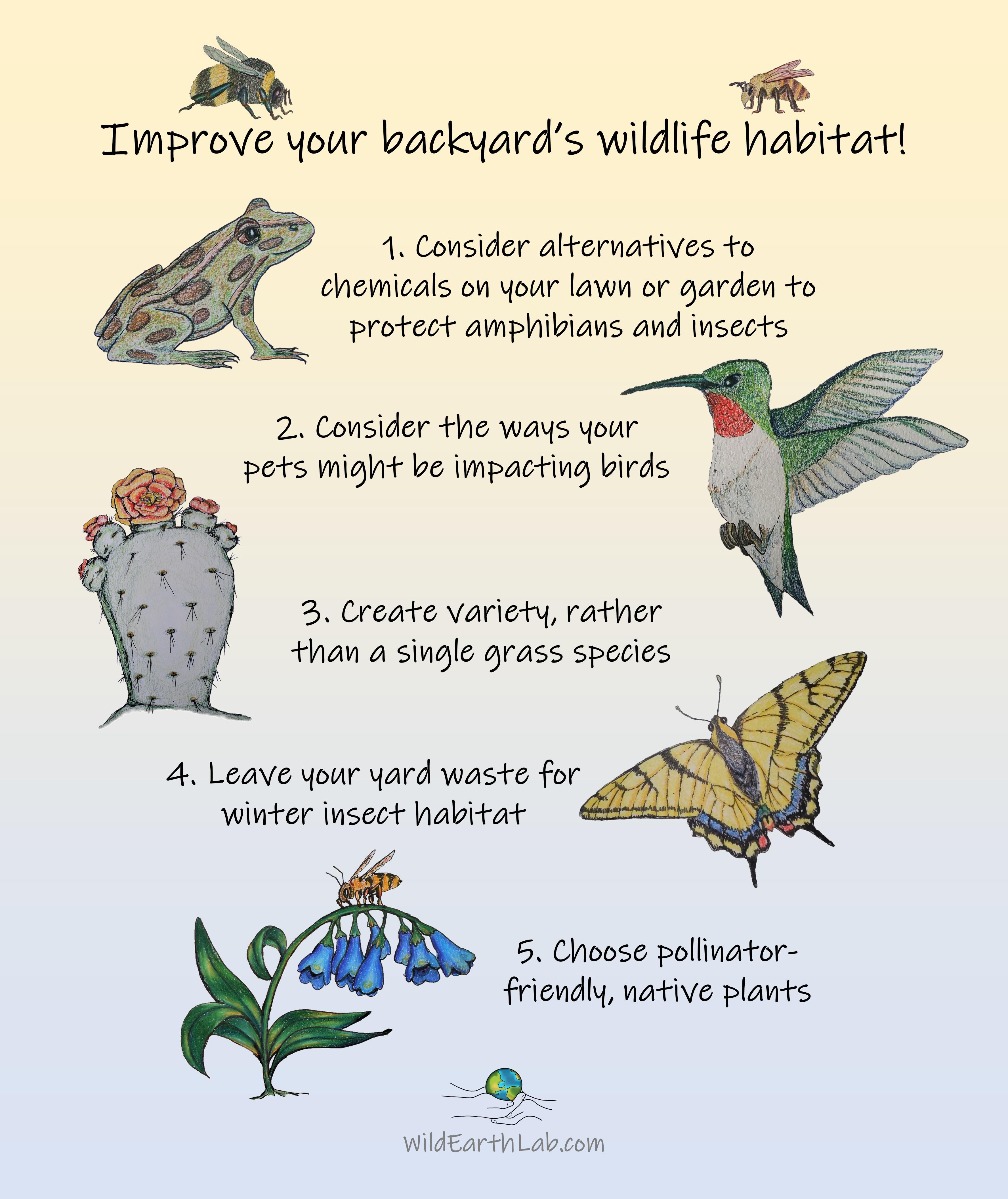 Improve your backyard's wildlife habitat by Wild Earth Lab