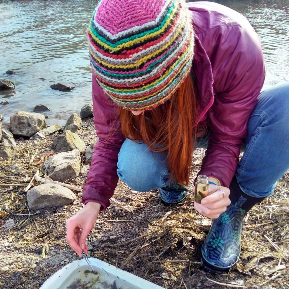 Scientist sits on the shore of a lake while sorting through a pan containing a lake benthic sample, looking for aquatic insects.