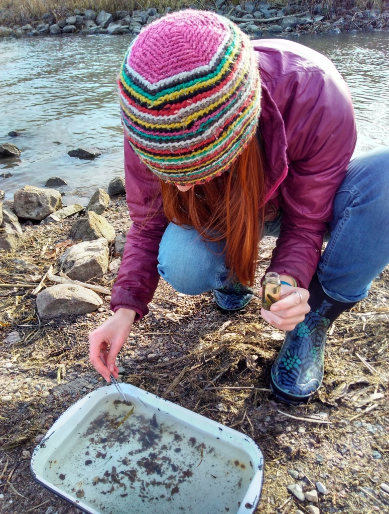 Valerie sits on the shore of a lake while sorting through a pan containing a lake sample, looking for aquatic insects.