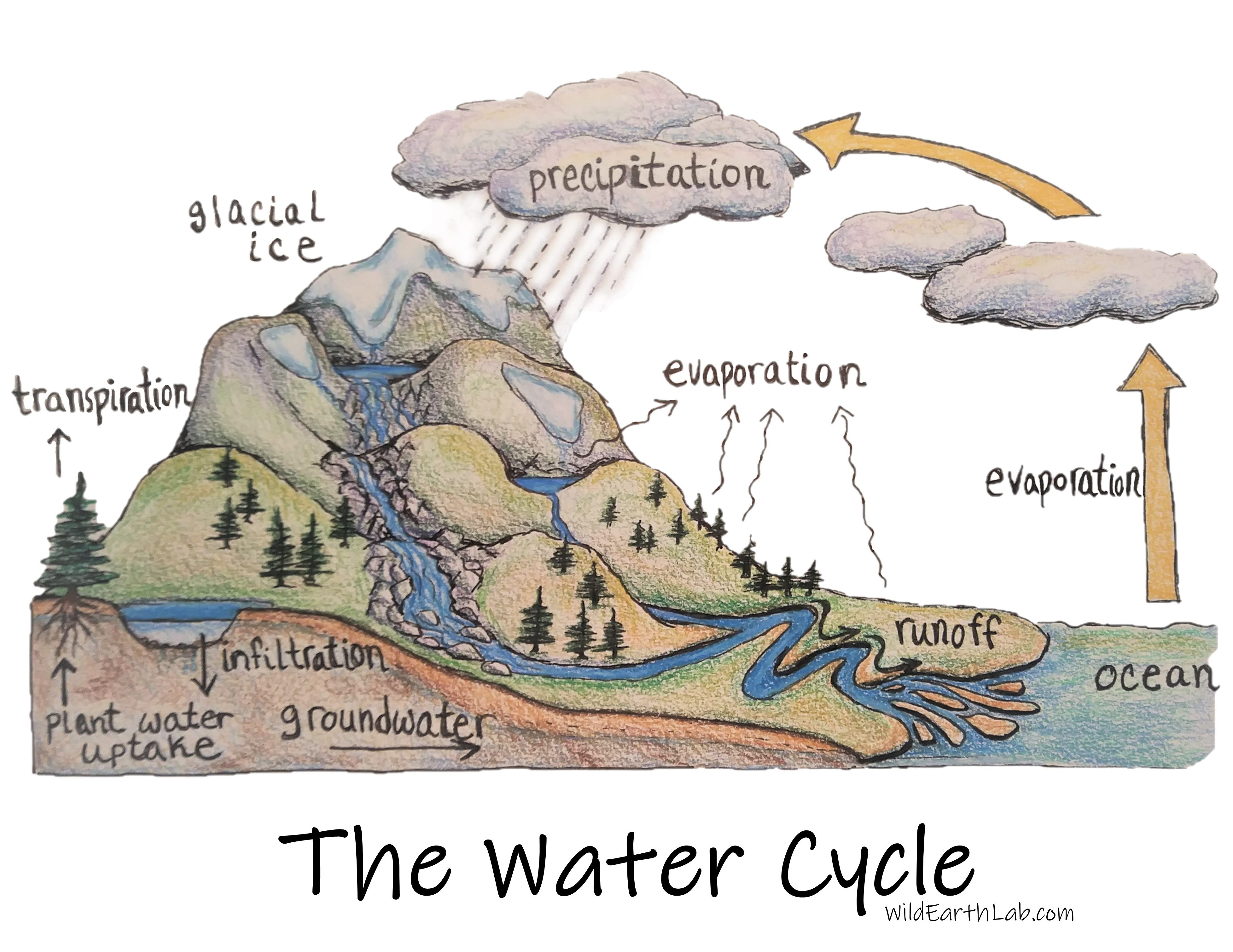 The water cycle diagram labeled drawing, hand-drawn with transpiration and infiltration of groundwater.