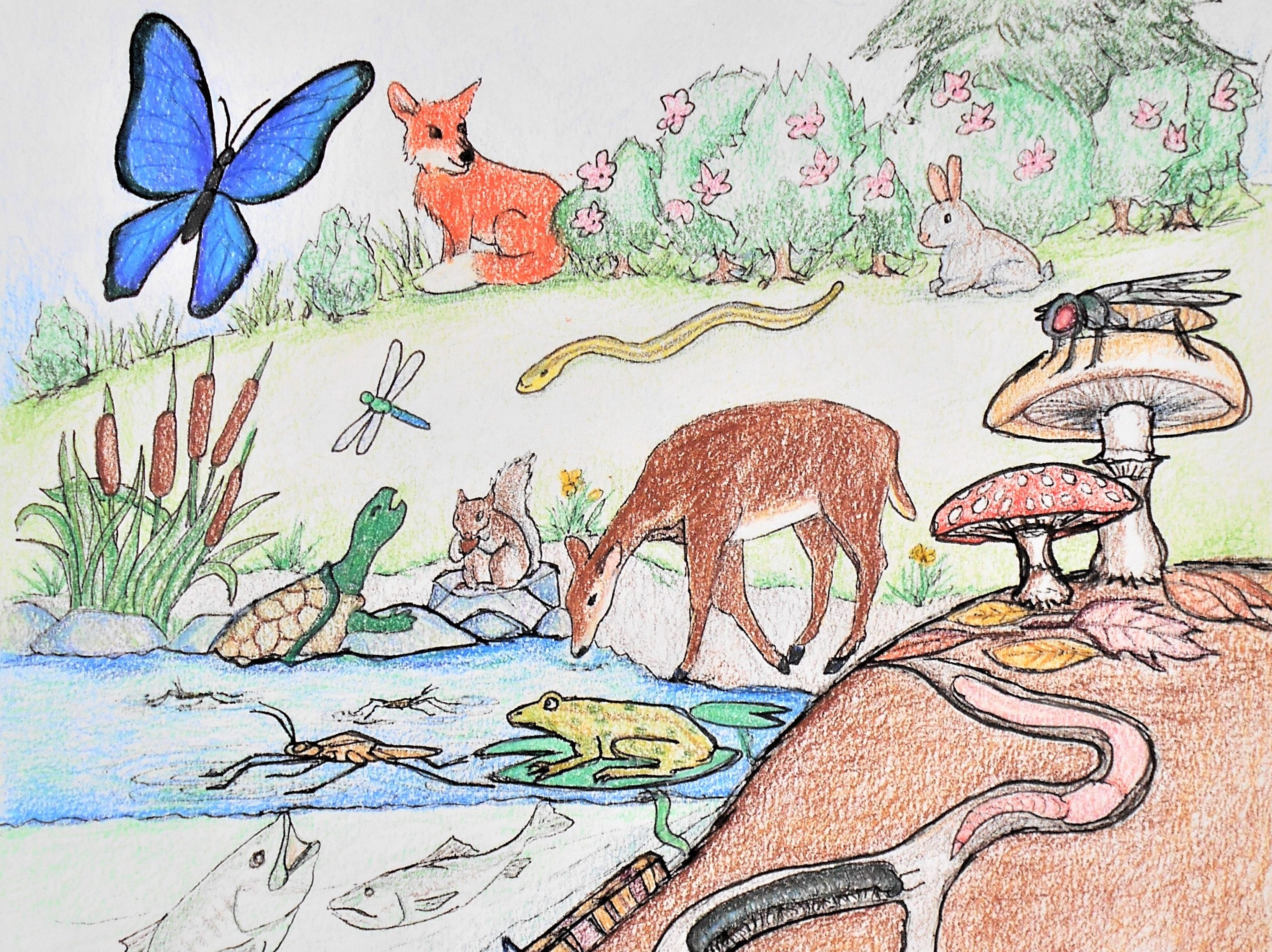 A food web poster of animals, plants, and fungi in an ecosystem